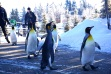 image penguin walk calgary zoo
